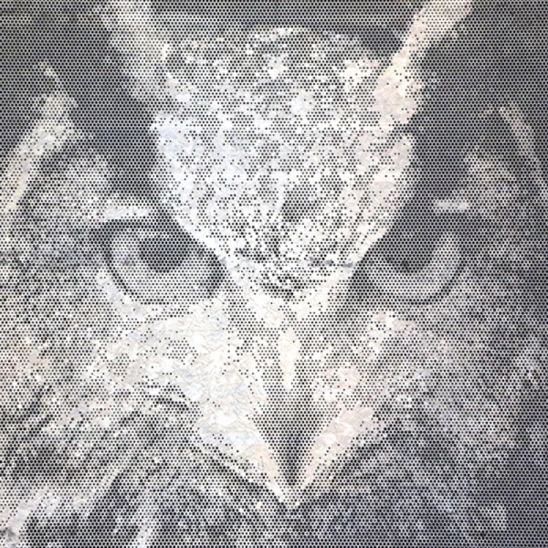 Picture-perf Owl